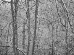 180101 Roudsea Wood 163