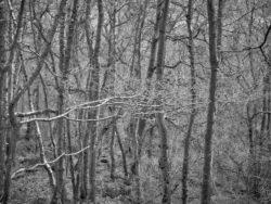 180101 Roudsea Wood 165 1