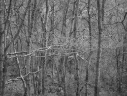 180101 Roudsea Wood 165