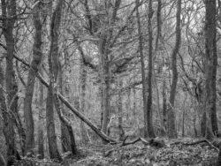 180101 Roudsea Wood 169