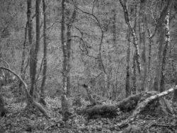 180101 Roudsea Wood 177