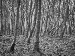180101 Roudsea Wood 185
