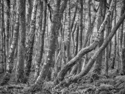 180101 Roudsea Wood 189