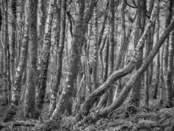 180101 Roudsea Wood 191