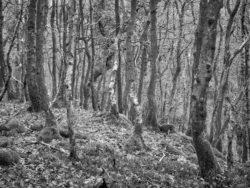 180101 Roudsea Wood 194