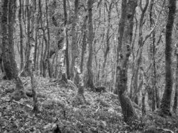 180101 Roudsea Wood 196