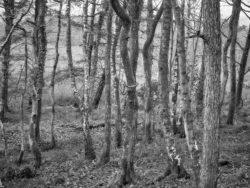 180101 Roudsea Wood 199