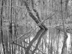 180103 Roudsea Wood 004