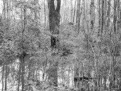 180103 Roudsea Wood 021