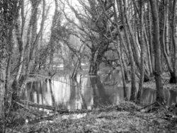 180103 Roudsea Wood 027 1
