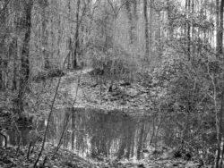 180103 Roudsea Wood 038