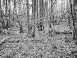 180103 Roudsea Wood 043