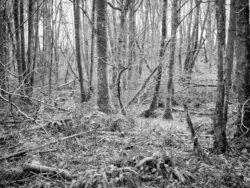 180103 Roudsea Wood 067