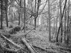 180103 Roudsea Wood 076