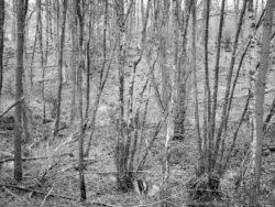 180103 Roudsea Wood 107