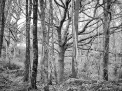 180103 Roudsea Wood 114