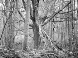 180103 Roudsea Wood 117