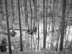 180103 Roudsea Wood 129
