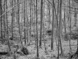 180103 Roudsea Wood 168