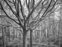 180103 Roudsea Wood 173