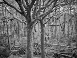 180103 Roudsea Wood 180