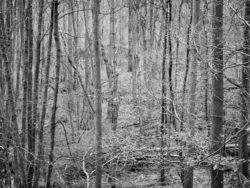 180103 Roudsea Wood 226