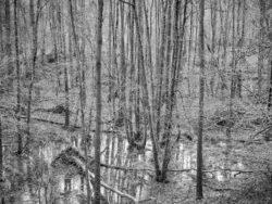 180103 Roudsea Wood 229