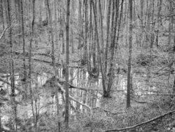 180103 Roudsea Wood 243