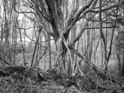 180103 Roudsea Wood 261