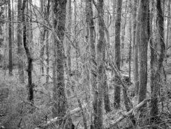 180103 Roudsea Wood 262
