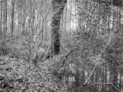 180103 Roudsea Wood 271