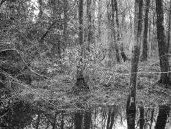 180103 Roudsea Wood 279