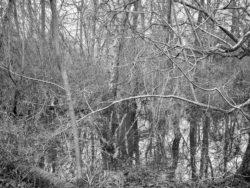 180103 Roudsea Wood 281