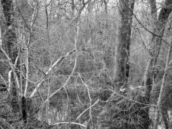 180103 Roudsea Wood 283