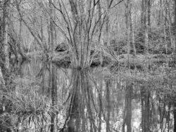 180103 Roudsea Wood 314