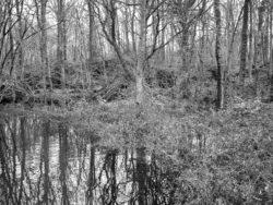 180103 Roudsea Wood 318