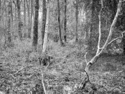 180103 Roudsea Wood 366