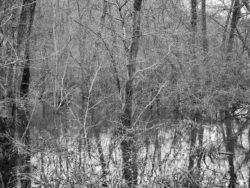 180103 Roudsea Wood 374