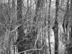 180103 Roudsea Wood 378