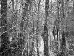 180103 Roudsea Wood 379