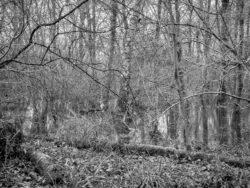 180103 Roudsea Wood 384