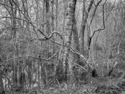 180103 Roudsea Wood 388