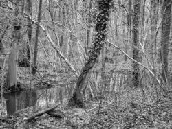 180103 Roudsea Wood 397