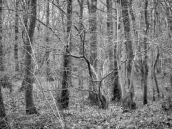 180103 Roudsea Wood 404