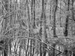 180103 Roudsea Wood 405