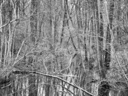 180103 Roudsea Wood 419