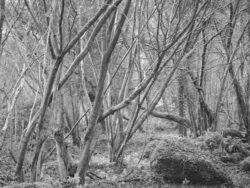 180105 Sea Wood 002