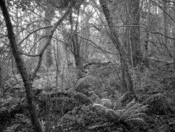 180105 Sea Wood 015