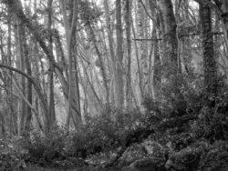 180105 Sea Wood 038