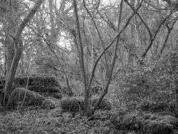 180105 Sea Wood 052